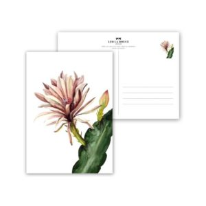 Leo La Douce Postkarte Red Cactus Flower
