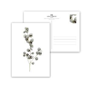 Leo La Douce Postkarte Eukalyptus